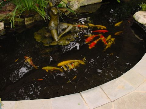 Creative Garden Spaces Inc, Winston-Salem NC, Japanese Koi, koi pond, fountain statue